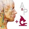 解剖和生理学app破解版安卓6.2